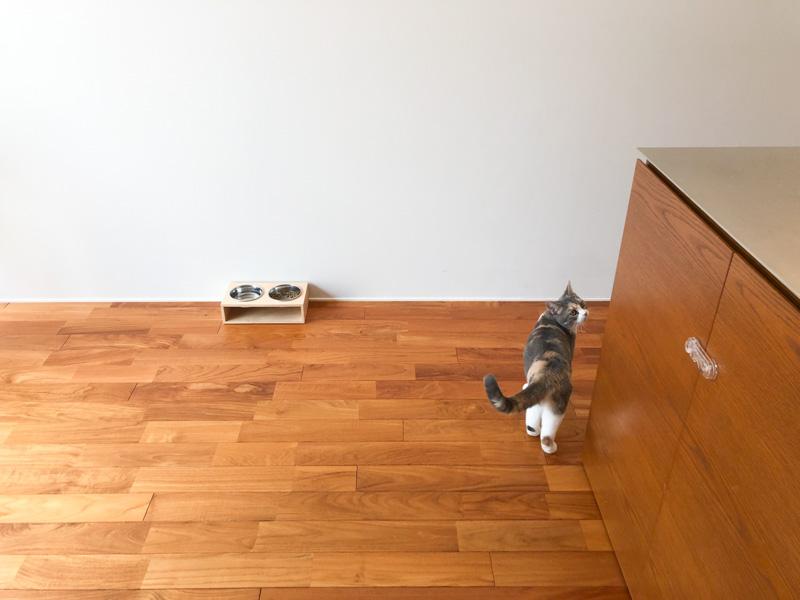 猫 スコティッシュフォールド シンプルインテリア