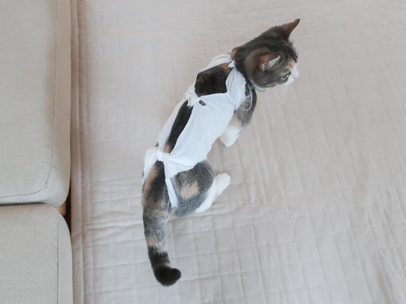 術後服を着た猫